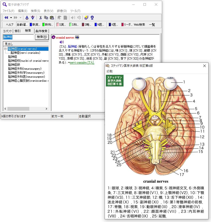 「ステッドマン医学大辞典」&「ステッドマン医学略語辞典」をダブルで搭載